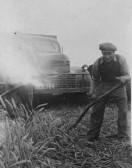 Jim Martin working in the fields in Pymoor.