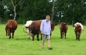 Don't look now. You're being followed! Chris Nye with his cattle in Pymoor, 2008.