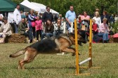 Dog agility display at the Pymoor Show 2008.