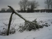 A tree in School Lane, after the heaviest fall of snow seen in Pymoor for 18 years.