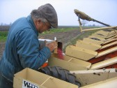 Roger Parson preparing to set sugar beet on his field off Pymoor Lane, Pymoor. 2007