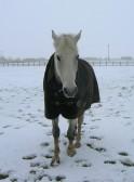 George enjoying the snow in Pymoor Lane, Pymoor, 2009.