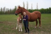 Gilly Banks of Dunkirk & Pymoor, with her two Suffolk Punches, Willow & Whisper, 2009.