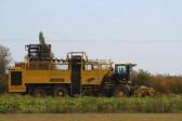Harvesting Sugar Beet in a field off Pymoor Lane, Pymoor.