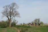 A group of walkers reach Frith Head Drove on the Pymoor & Oxlode Walk 2011.