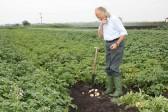 Tony Rudderham considers his potato crop on his land in Dunkirk, Pymoor.
