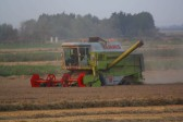 Combine harvesting in Pymoor 2010.