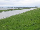 After the wettest April on record the Ouse Washes are in flood. These cattle were stranded on the bank near Oxlode, Pymoor, 2012.