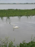 After the wettest April on record the Ouse Washes are in flood. Oxlode, Pymoor, 2012.