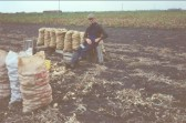 William Leaford sitting on sacks of onions in Pymoor.. William Leaford
