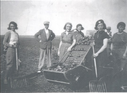 Potato 'riddling' at Starlings Farm, Pymoor, circa 1941