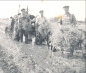 George and Jack Bell with Eric Saberton harvesting wheat in Pymoor, circa 1958.