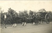 Shire horses transporting corn in Pymoor