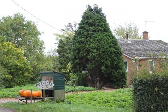 Pumpkins for sale outside 14, Pymoor Lane, Pymoor.