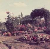 Eric & Doris Saberton's garden at 39, Main Street, Pymoor.