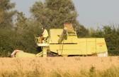 Harvesting a field of wheat, off Pymoor Lane, Pymoor, 2012.