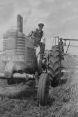 Johnny & Jim Martin cutting Barley on Dunkirk Farm, Dunkirk, Pymoor.
