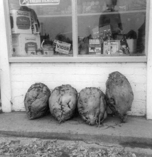 Mangelwurzels out side Barkers Shop in Main Street Pymoor. 1958