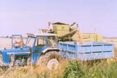 Eric Barker on his combine harvester in his field off Pymoor Lane, Pymoor. (circa 1985)