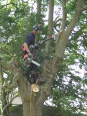Tree Removal in Pymoor Lane 2014