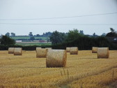 Straw Bales in Graham Lark's field off Pymoor Lane, Pymoor 2014