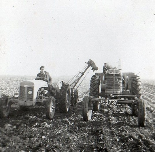Dennis Hall harvesting beet in Pymoor, circa1950