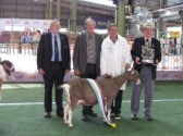 Chris Nye was invited to to Australia as the United Kingdom Judge at the Sydney Royal Dairy Goat Show, 2015