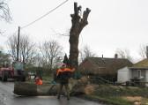 Tree Felling in Pymoor Lane, 2015