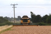 Harvesting Wheat in Pymoor, 2013 (Video)