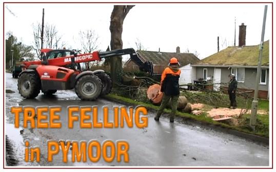 Tree Felling in Pymoor Lane, Pymoor, 2015 (Video)
