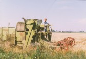 Eric Barker harvesting wheat, circa 1985