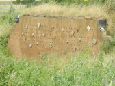 Sand Martins nest in the holes in this wall at Widgeon House, Dunkirk, near Pymoor, 2016