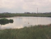 Oxlode Fishing Lakes, Oxlode, near Pymoor, June 1995
