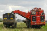 Harvesting Sugar Beet on a field to the south of Pymoor Lane, Pymoor, 2017
