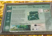 Sign to Muchwood and Marys's Wood, Ramsey. Planted to commemorate the Millenium in the year 2000.