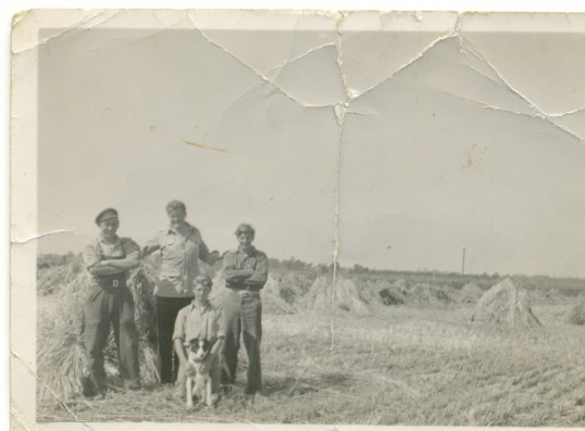 The Stooking Gang at Oak Farm, Ramsey Hollow. Eric Chamberlain, Charlie Ford, Peter Chamberlain, Michael Skidmore