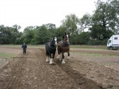 Bella (22yrs) & Beth (11yrs) Shire Mares ploughing at the Ramsey Rural Museum Country Fair