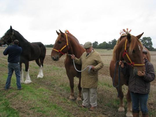 Horses at  the Ramsey Rural Museum Country Fair
