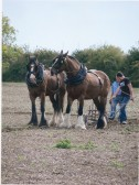 Horses ploughing at the Ramsey Rural Museum Plough and Counrty Fair (courtesy J Sutherland)