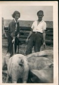 Dinie Tingey (nee Jones) and Bill Moulding, feeding pigs, atIngles Farm, Ramsey Mereside.