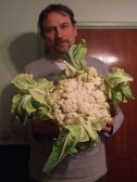 Ted Howard's large 12.5lb cauliflower,grown at Stocking Fen, Ramsey,held by Nigel Butcher