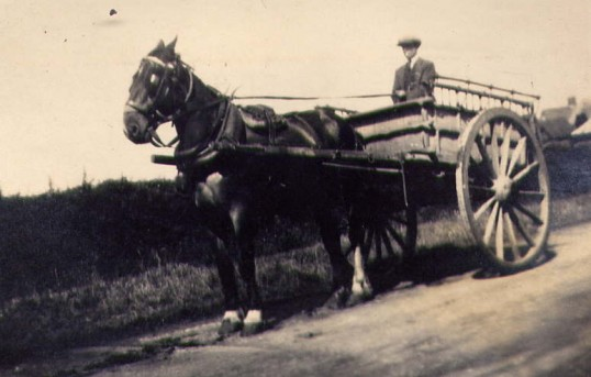 Horse and Cart at Mere Farm.
