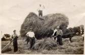 Harvesting at Mere Farm, Ramsey Forty Foot