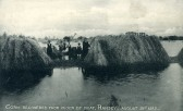 Ramsey Floods, 31st Aug1912. Corn Being Recovered