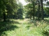 Aversley Wood Sawtry, on a summers day