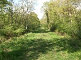 Aversley Woods Sawtry, a view of one of the main pathways.