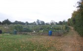 St. Judith's Allotments Sawtry. (Plenty of fresh vegetables growing)