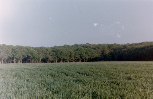 St. Judith's Archaeological Dig Sawtry.(A view of Archer's Wood looking West from the site.)
