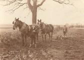 Farming in Sawtry.