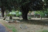 All Saints Churchyard, Sawtry. (Start of clean up by friends of All Saints Church.)